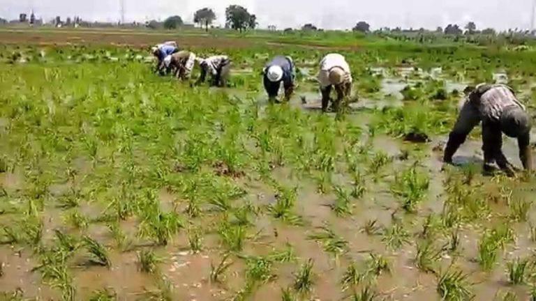 بعد ظهور أنباء عن بيع مياه الري للمزارعين بمصر …هذا هو رد الحكومة